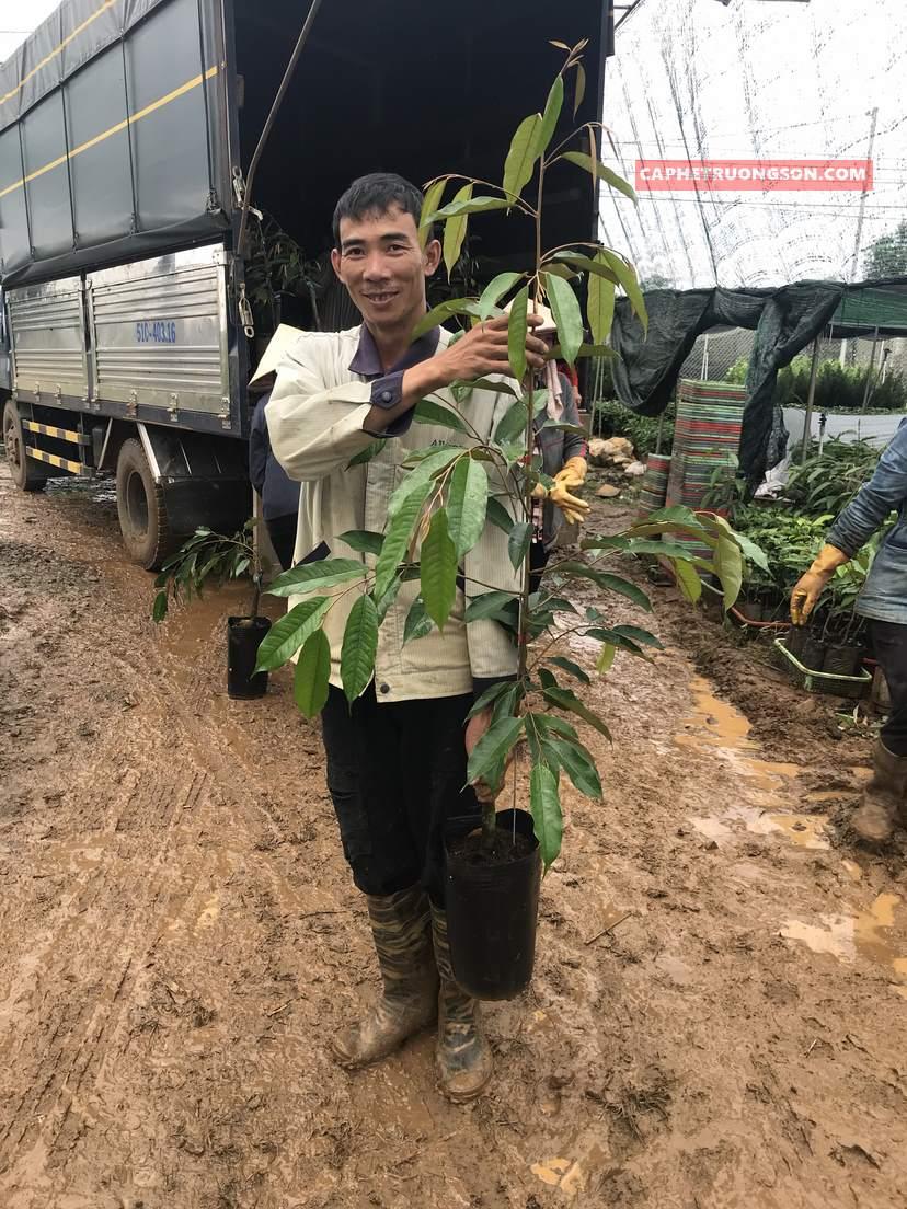 sầu riêng thái land monthong dona caphetruongson.com